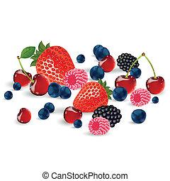 frisk, vektor, berries