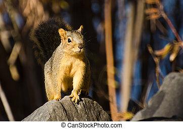 Frisky Squirrel Resting on a Rock