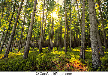 friss, erdő, napkelte