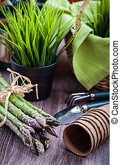 friss, zöld, spárga, noha, kert szerszám
