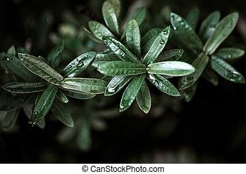 friss, zöld, zöld háttér, nedves