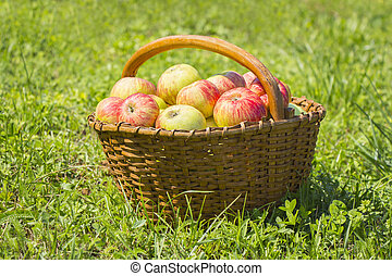 frissen, piros alma, alatt, a, fából való, kosár, képben látható, zöld fű