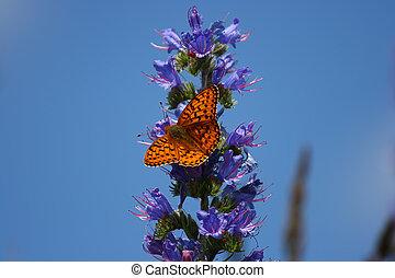 Fritillary - A butterfly on a flower