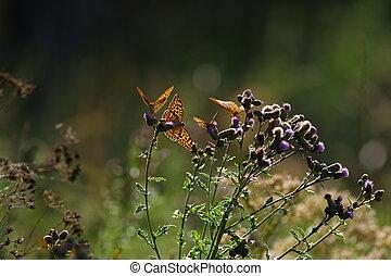 Fritillarys having fun pollinate some flowers