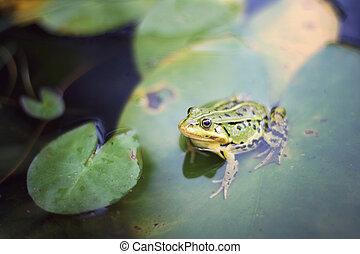 A closeup of a green frog