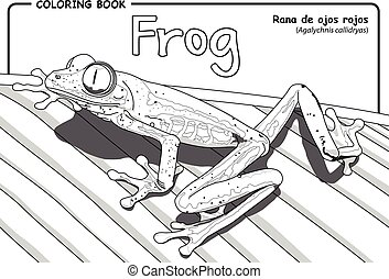 Frog (Agalychnis callidryas) on white background - Coloring...