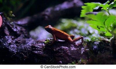 Frog at the aquarium glass. Seaquarium: rare, fish, aquarium. 3840x2160