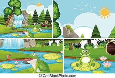 Frog at the pond set background