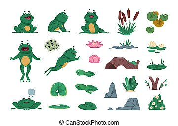 Frog. Cartoon amphibian with pond and river plants. Growth steps of life cycle. Isolated wild animals sitting or jumping. Lotus flowers and water lily leaves. Vector croaking toads set