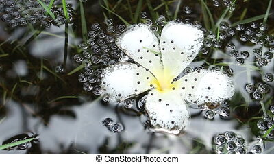 Frog eggs in water