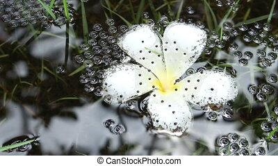 Frog eggs in water
