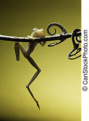 frog falling - tree frog hanging on a small twig with curly...