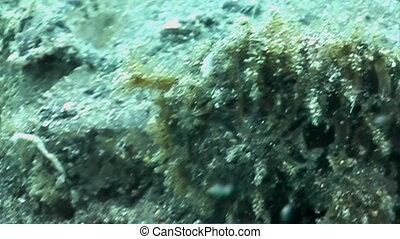 Frog Fish - Close up of a Frog fish.