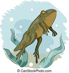 Frog Front Legs Illustration