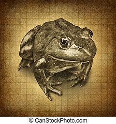 Frog grunge