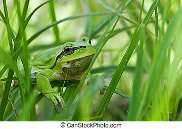frog head in grass closeup