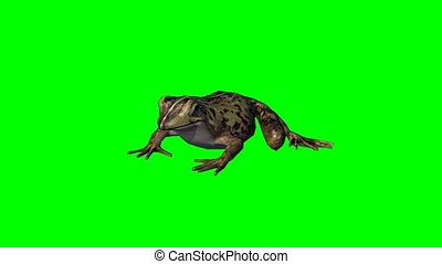 frog idle - green screen