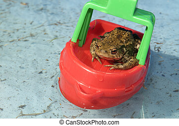 Frog In A Boat