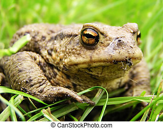 Frog in the grass - Nice Frog looking from the grass