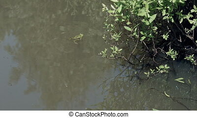 Frog in the pond with swamp vegetations
