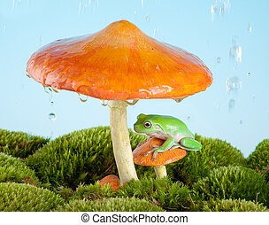 White-lipped tree frog on a toadstool or mushroom hiding for the rain
