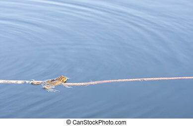 Frog in water on a long branch