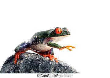 frog is blind