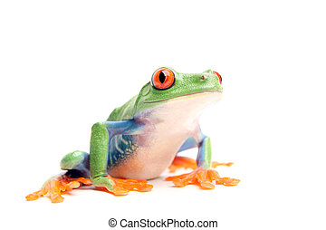 frog isolated on white - frog closeup isolated on white - a...