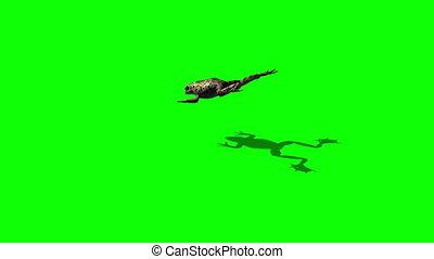 frog jump - 3 different views - green screen