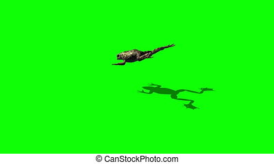frog jump - 3 different views - green screen