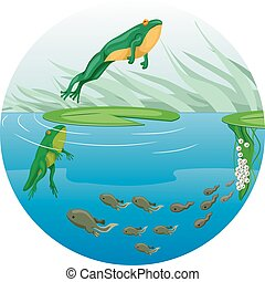 Frog Life Cycle Chart - Cute Animal Illustration Featuring...