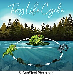 frog life cycle concept