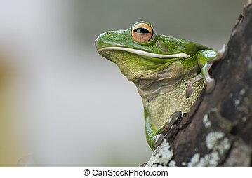 Frog look up