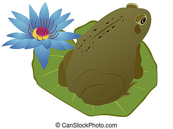 Frog on a lotus leaf