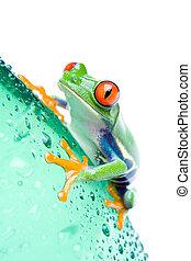 frog on bottle isolated white