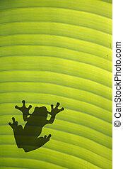 Frog on Leaf - Tree frog on sunlit leaf from below