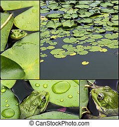 Frog on lily pad collage