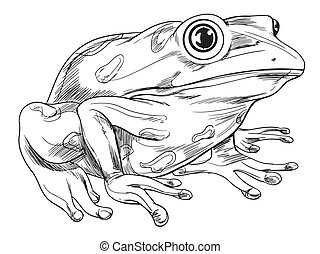 Frog outline - Black and white sketch of a frog