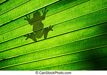 Frog Silhouette - Shadow outline of a frog sitting on a...