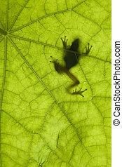 Frog Silhouette - Tree frog backlit on a leaf