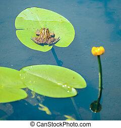 Frog sitting on leaf