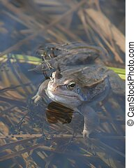 Frog. Water. A pond.