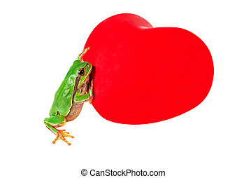 Frog with heart shape. Green frog with red heart shape symbol isolated on white with clipping path