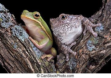 Froggy friends
