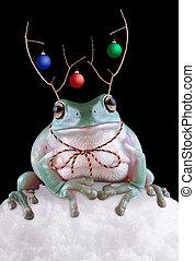 A whites tree frog is wearing reindeer antlers.