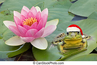 A frog is wearing a santa hat while sitting next to a water lily.