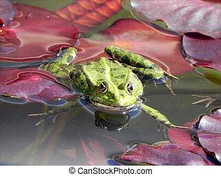 Froggy sunbath