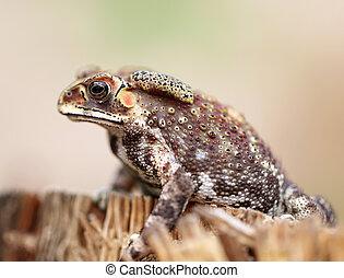 frogs, foto, verticaal