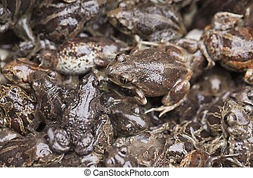 Frogs in a pile