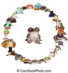 Frogs set on white